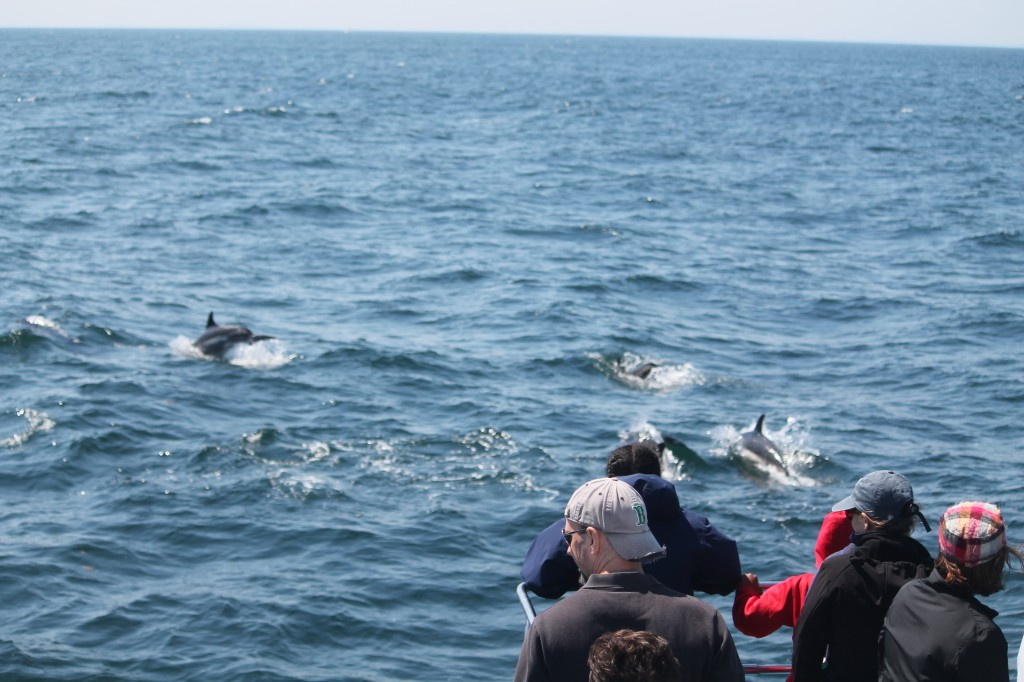 Newburyport Whale Watch | Whale Watch Tours | Private