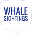 Whale Sightings
